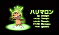 『ポケットモンスター X』・『ポケットモンスター Y』ハリマロン 「Pokémon Direct 2013.1.8」より (C)2013 Pokémon.(C)1995-2013 Nintendo/Creatures Inc./GAME FREAK inc.
